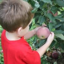 Teaching Kids About Nutrition Through Apple Picking