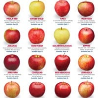 Which Apple to Use? Discover the 16 Varieties of Michigan Apples!