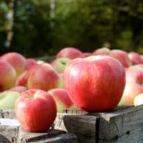Which Apple to Use? Discover 16 Types of Apples from Michigan!