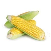 corn on the cob on white background
