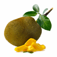 jackfruit on white background