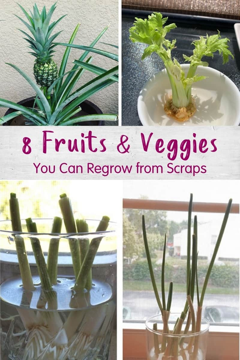 Best Fruits and Vegetables You Can Regrow from Scraps