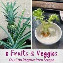 8 Fruits & Veggies You Can Regrow from Scraps