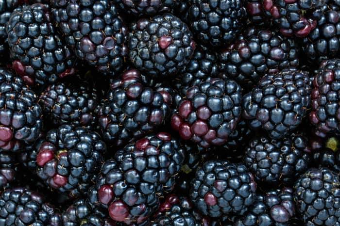 blackberries shaded black to dark purple