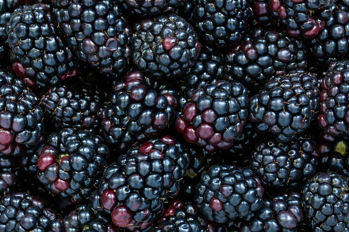 blackberries shaded black to dark purple