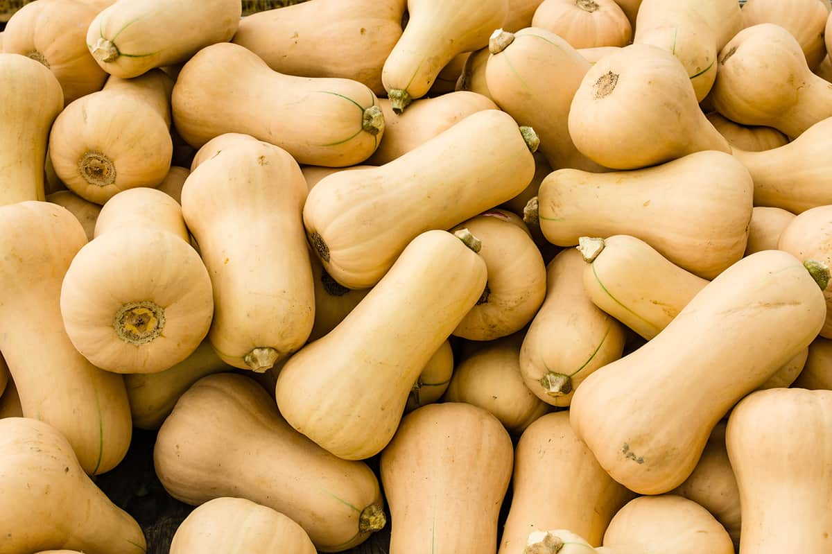 pile of butternut squash