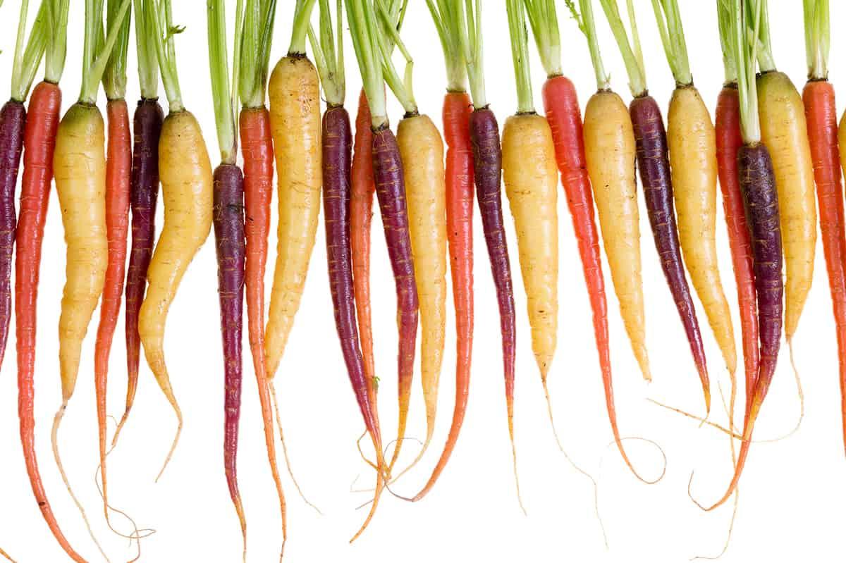 Row of freshly washed red, orange and yellow carrots over white background for concept about organic vegetables