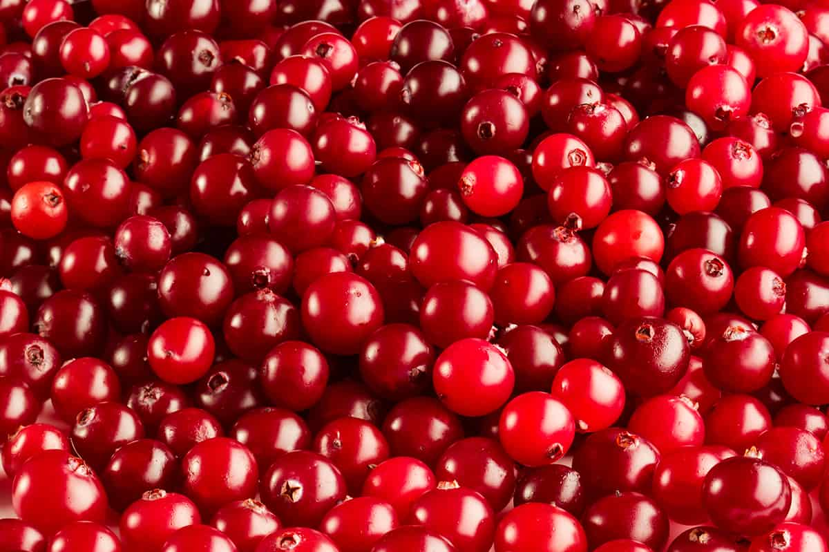 Fresh ripe red cranberries background