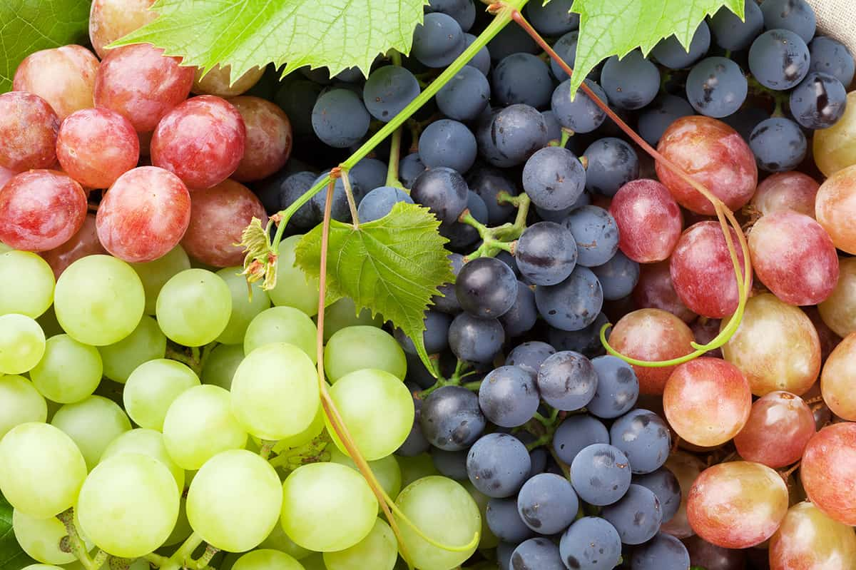 red, green and purple grapes