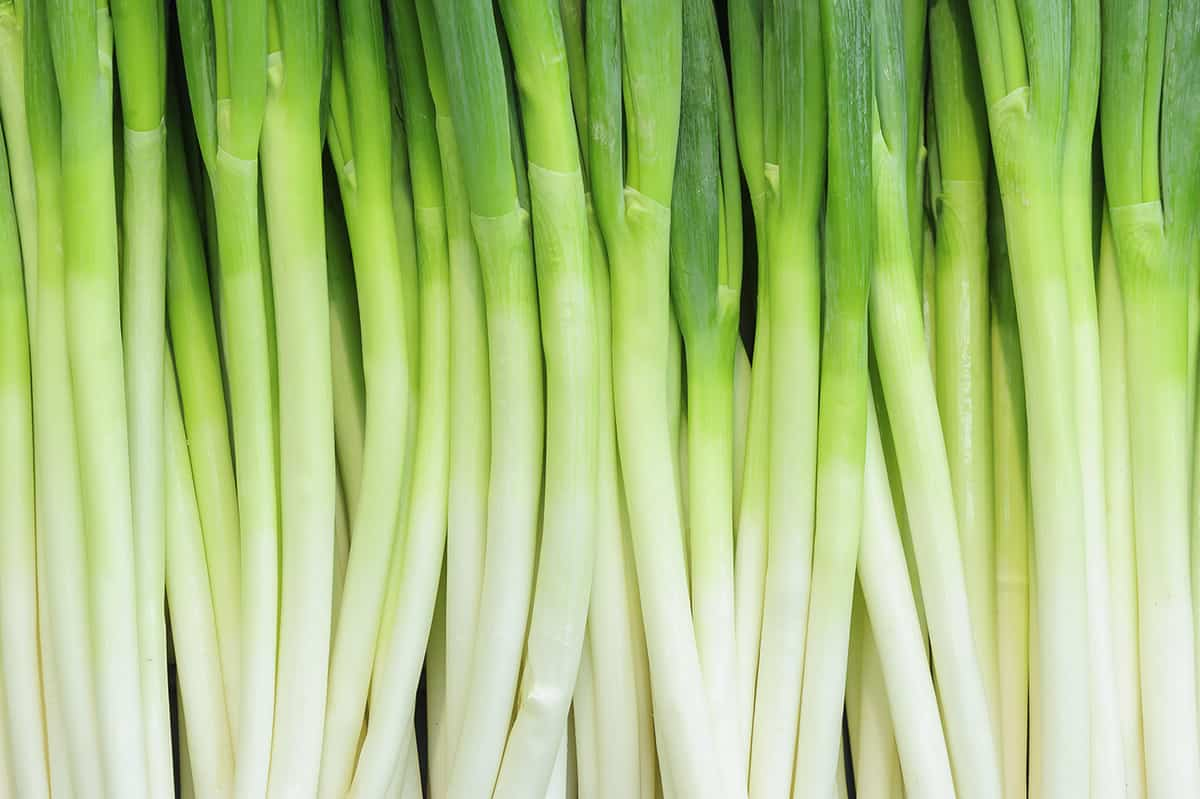 green onions as a background