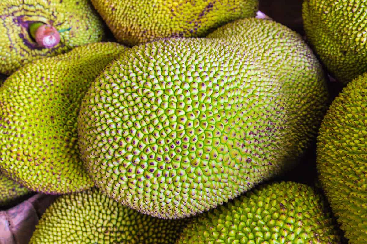 close up of whole jackfruit