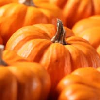 What's in Season for October?