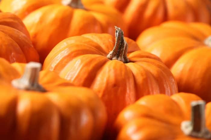 Closeup of small pumpkins