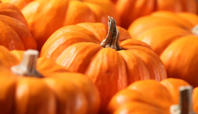 Closeup of small pumpkins
