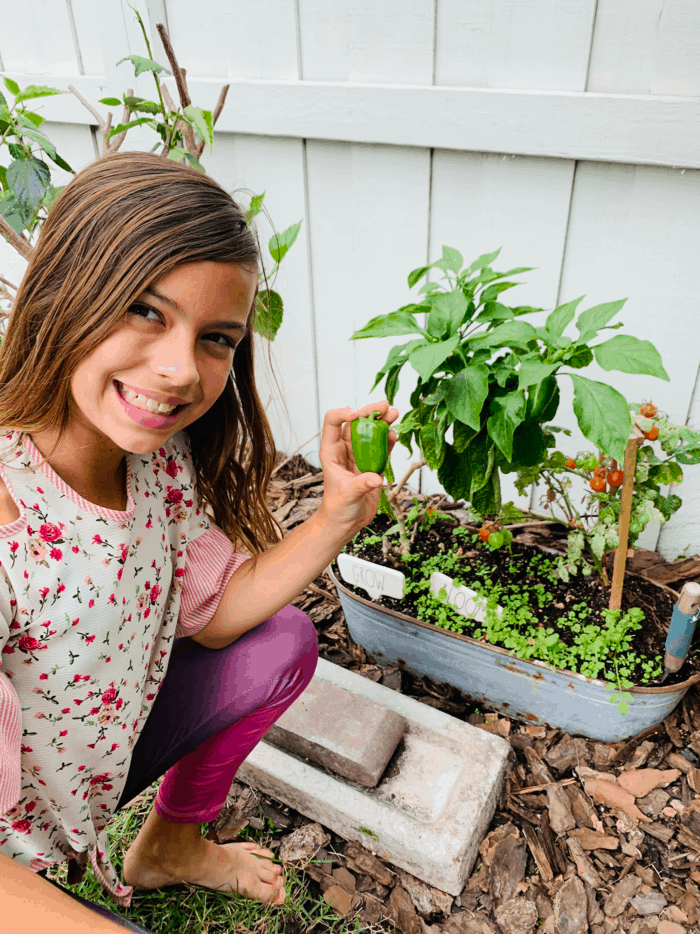 Girl picking peppers from the garden.