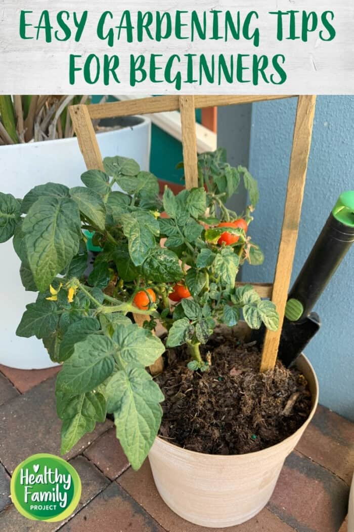Potted tomato plant with title overlay.